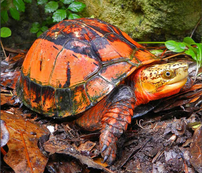 turtle-survival-cover-photo