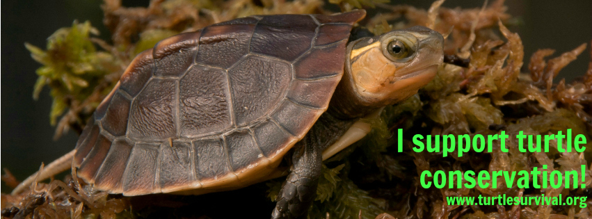 Chinese Box Turtle (Cuora flavomarginata) Photo Credit: Brian Horne