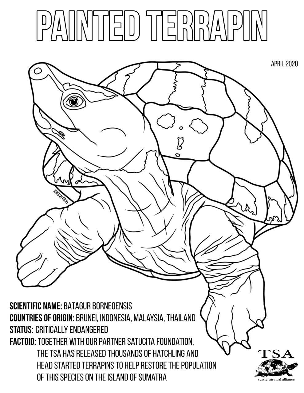 Jordan Coloring Pages Indonesia Photos
