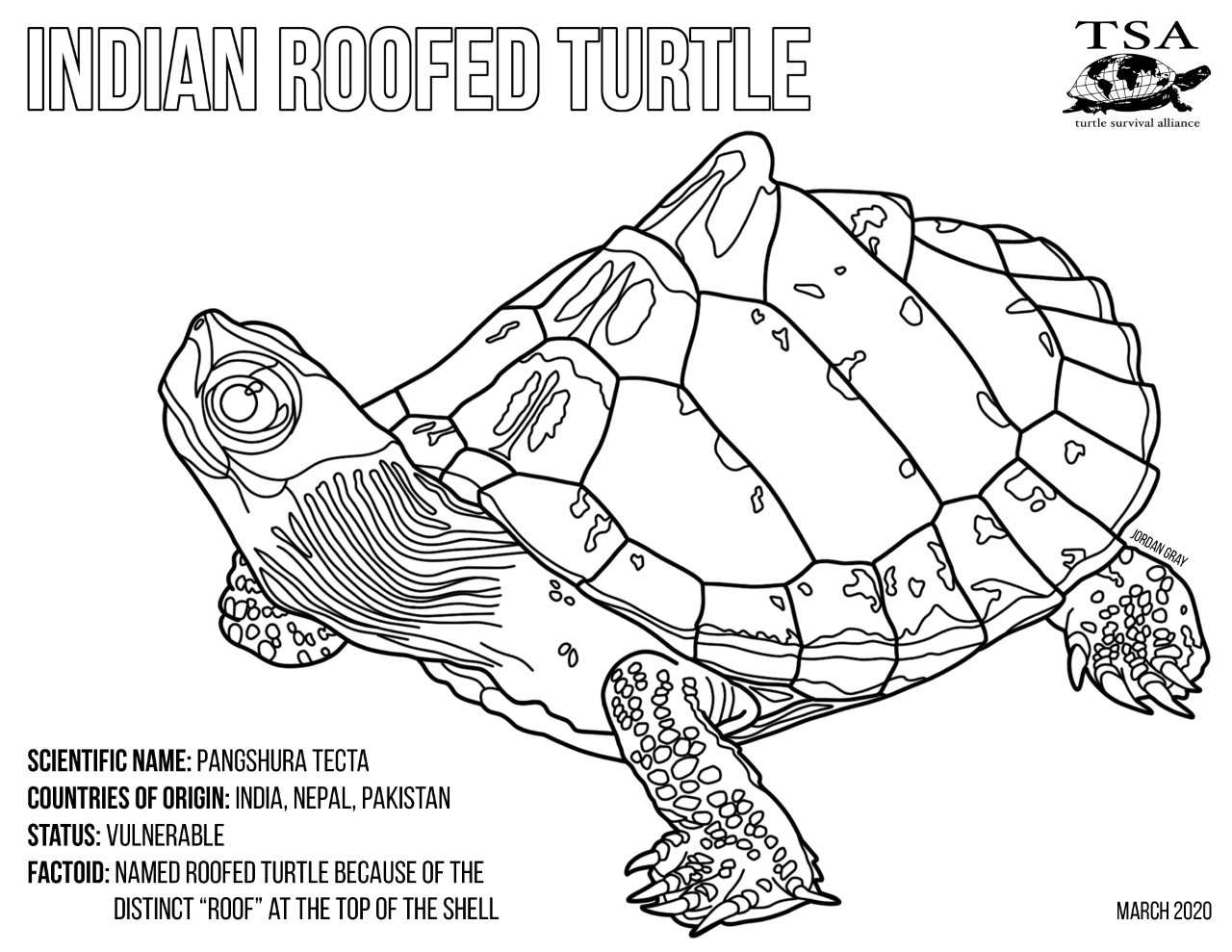 Turtle Coloring Pages Turtle Survival Alliance