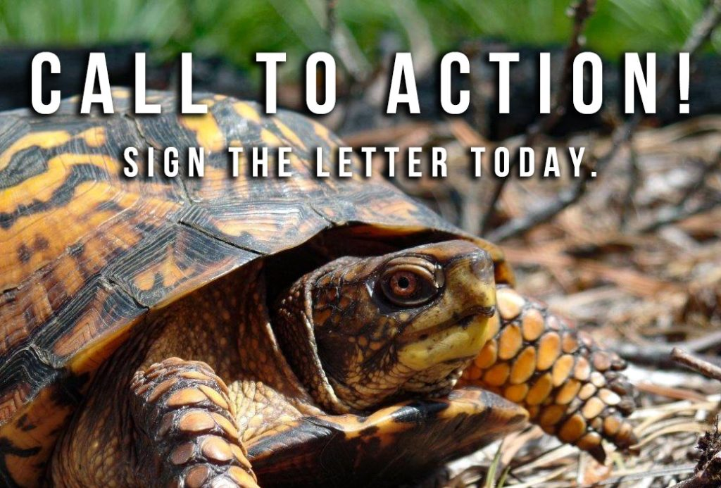 CALL To ACTION (2)