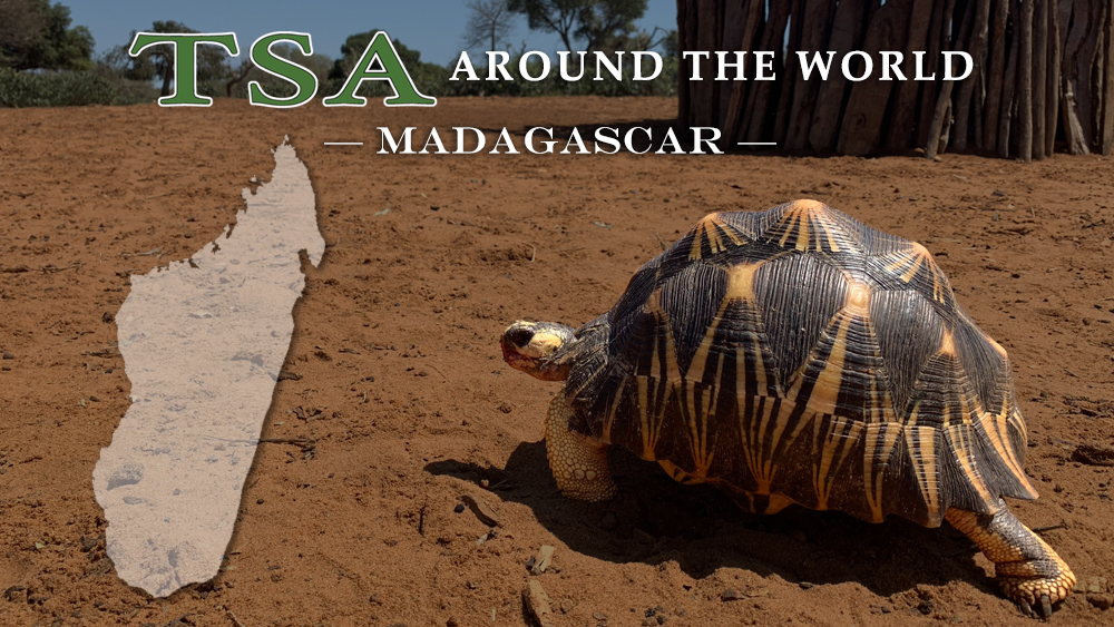 TSA Around the World_Madagascar Website