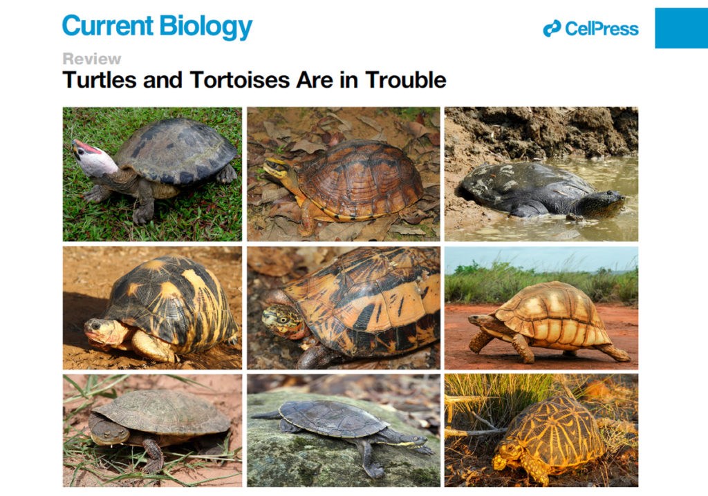 Turtles in Trouble Web Slide
