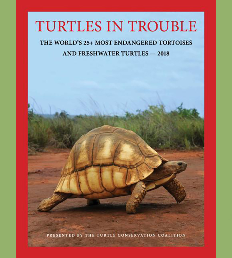 Turtles In Trouble
