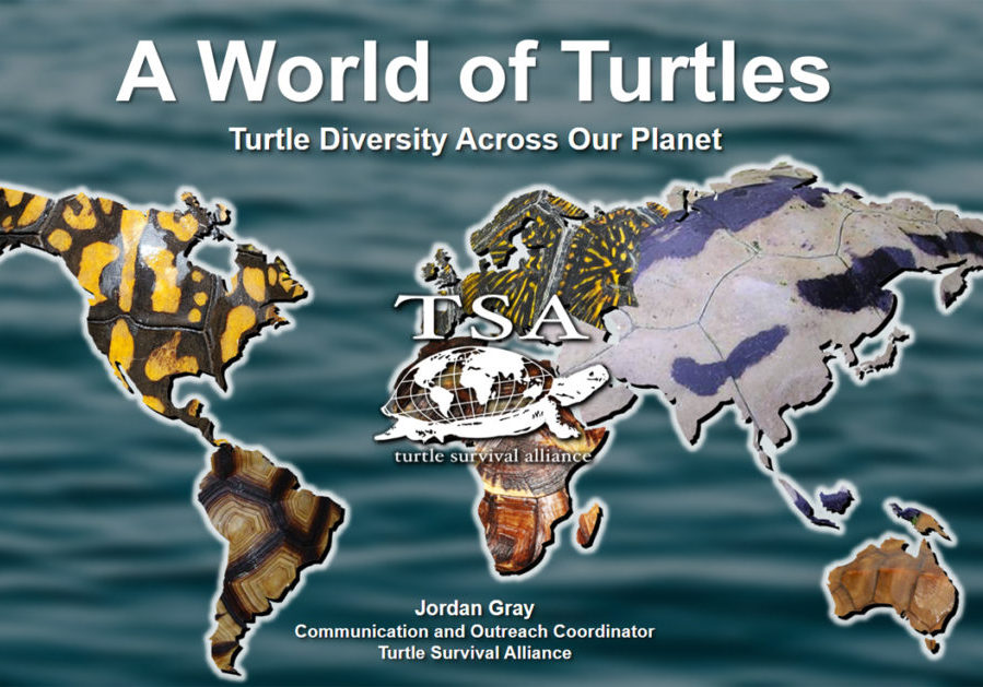 A World of Turtles Promo