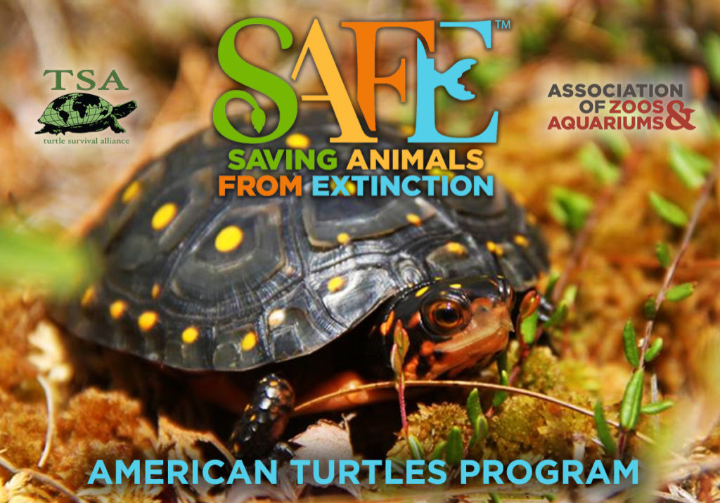 AZA SAFE American Turtles