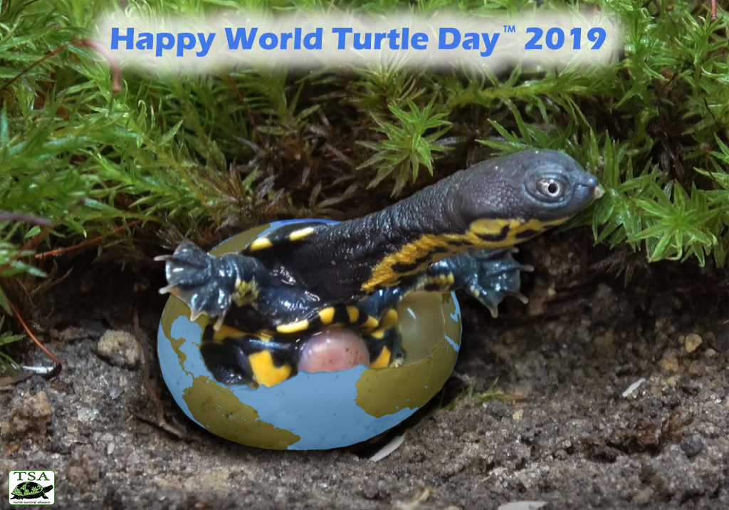 Happy-World-Turtle-Day-2019