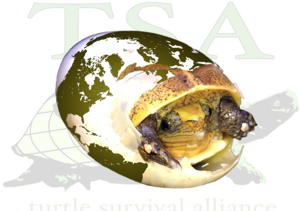 TSAs-10-Ways-You-Can-Help-Turtles
