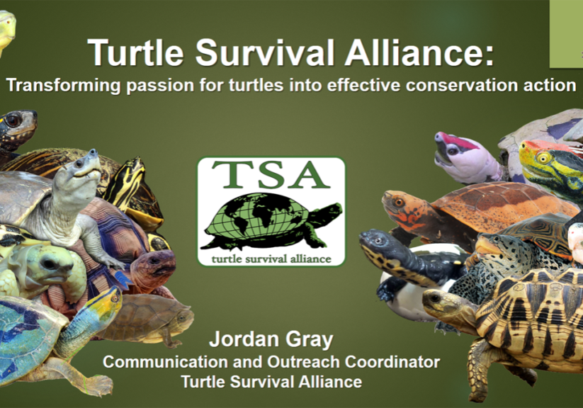 Transforming Passion for Turtles into Effective Conservation Action PROMO
