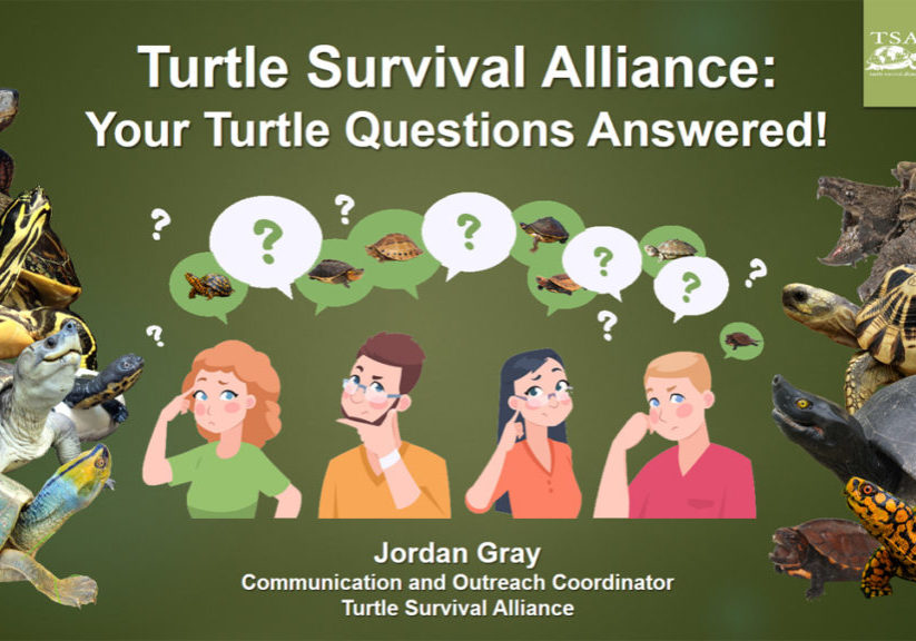 YOUR Turtle Questions Answered