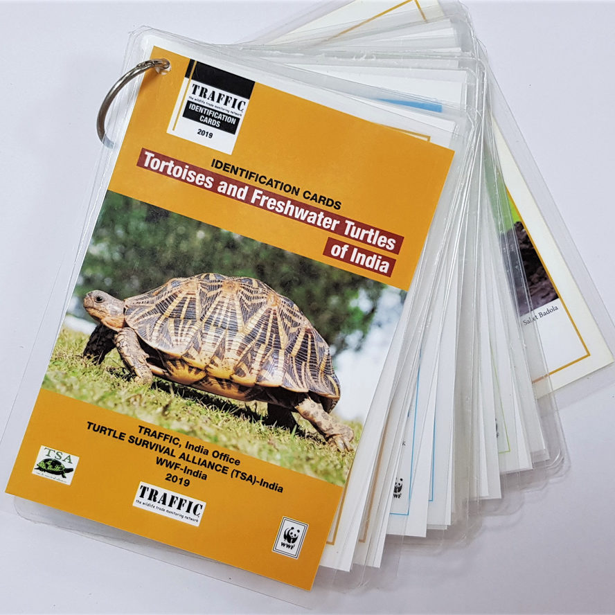 tortoise_and_freshwater_turtles_id_cards__1_